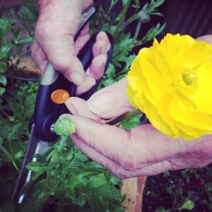 Jean tending her flower garden